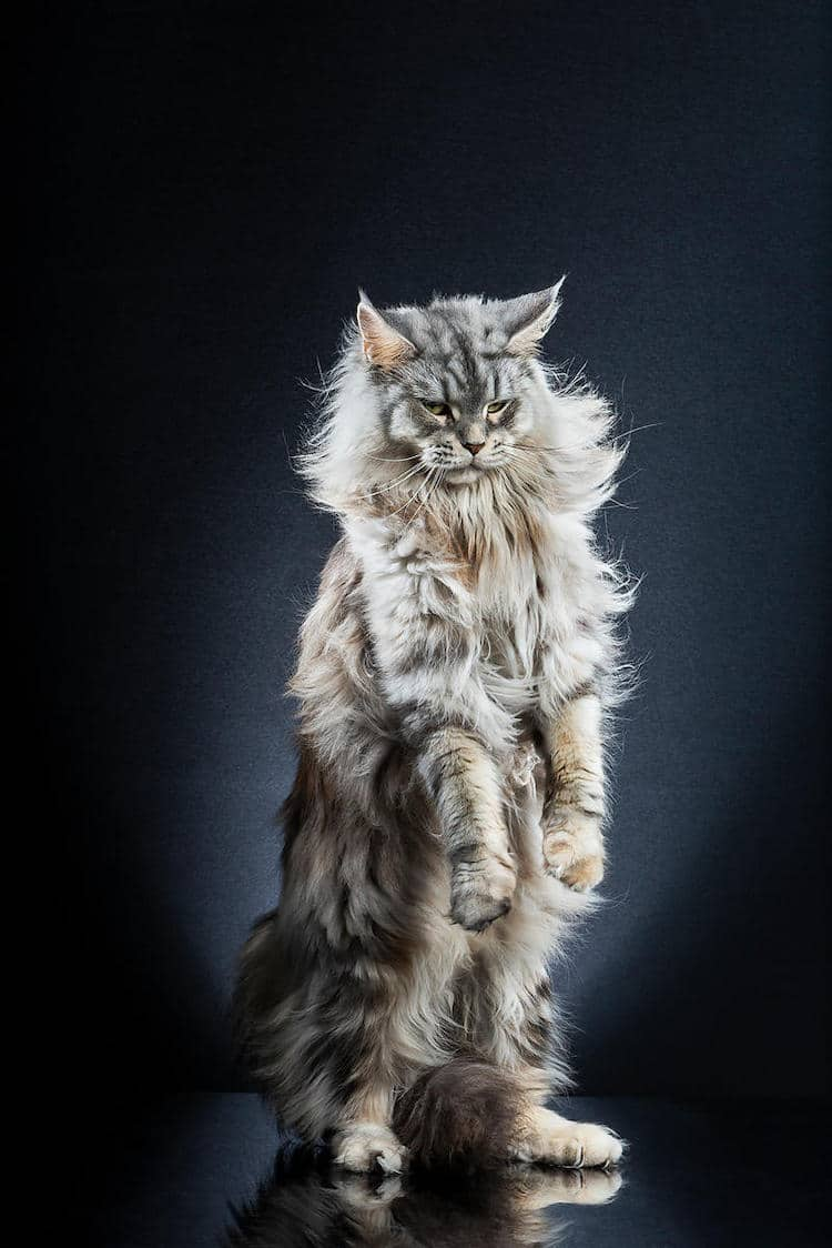 Funny Cat Photos by Alexis Reynaud