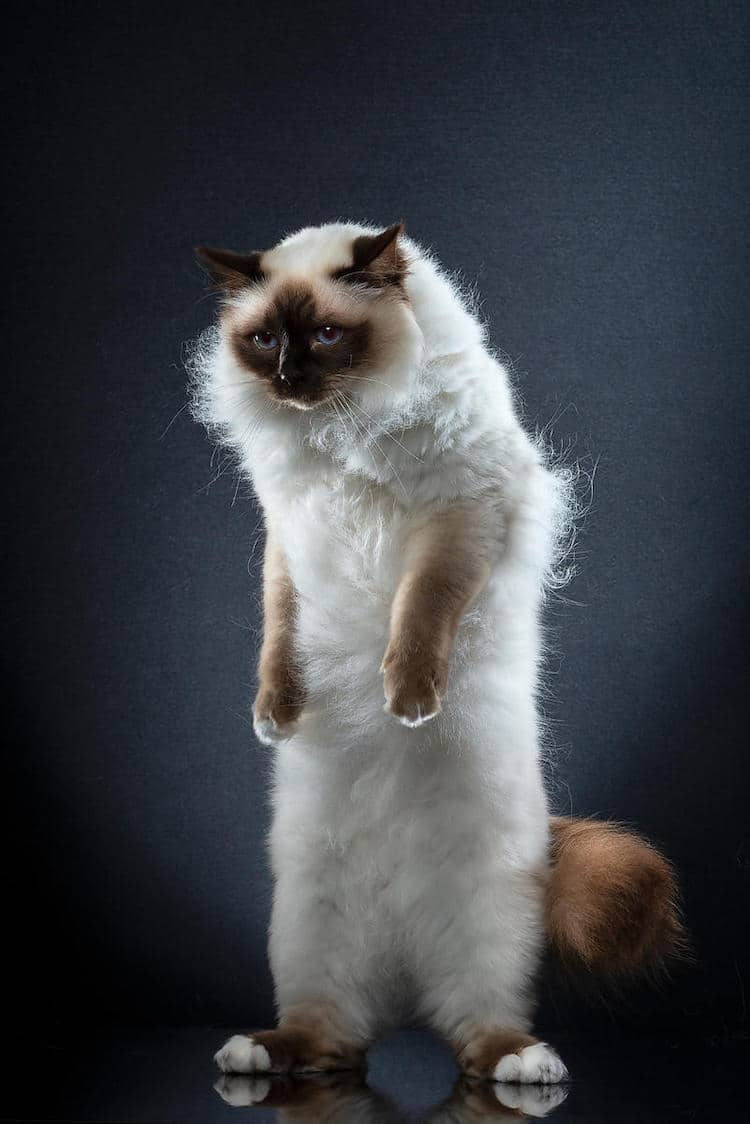 fotos de gatos parados