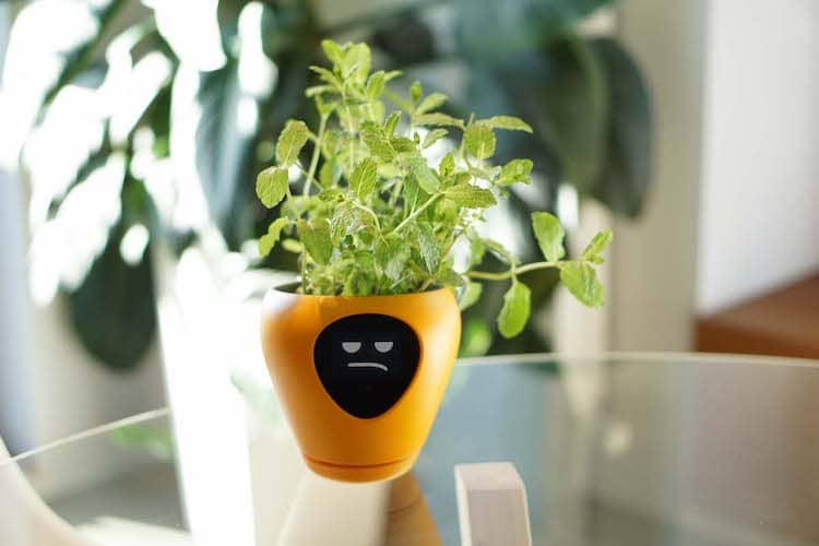 Virtual Pet Planter