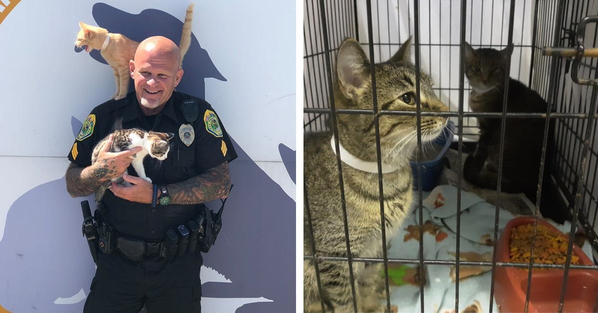 https://mymodernmet.com/wp/wp-content/uploads/2019/07/muncie-police-department-cat-donations-thumbnail-thumbnail.jpg