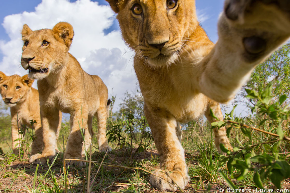 cachorro leon selfie o selfies de animales