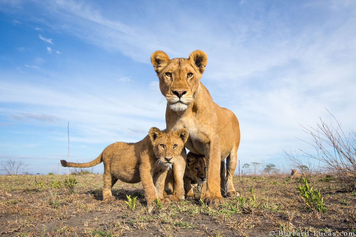 African wildlife photographed by Will Burrard-Lucas