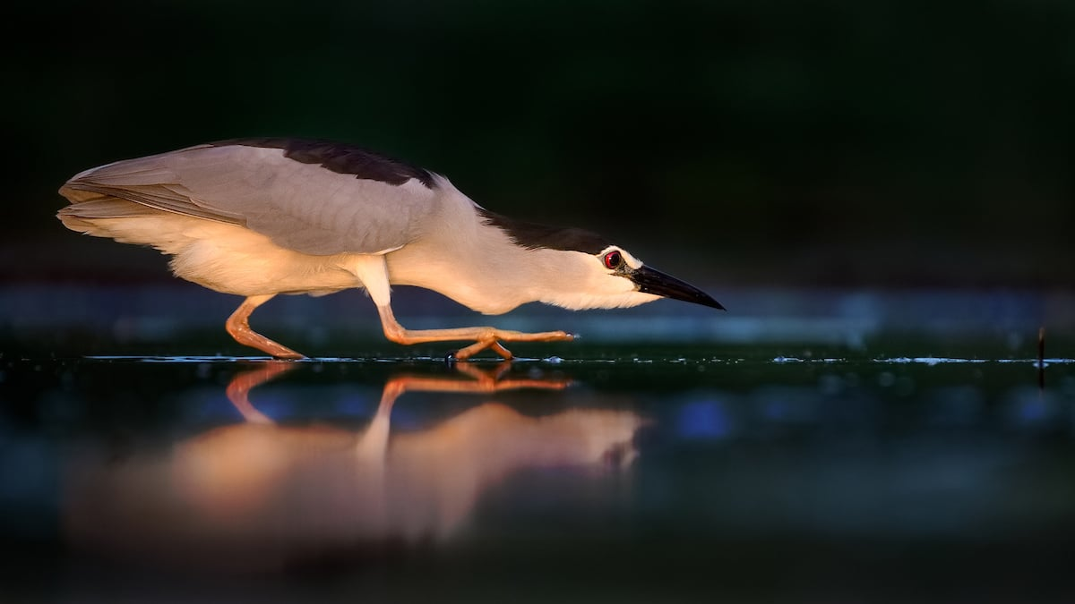 Concurso Bird Photographer of the Year 2019
