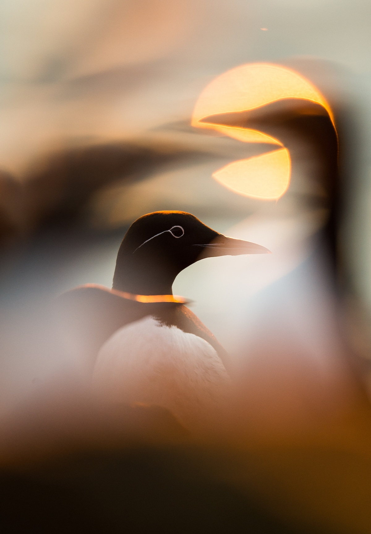 BirdPOTY Awards 2019