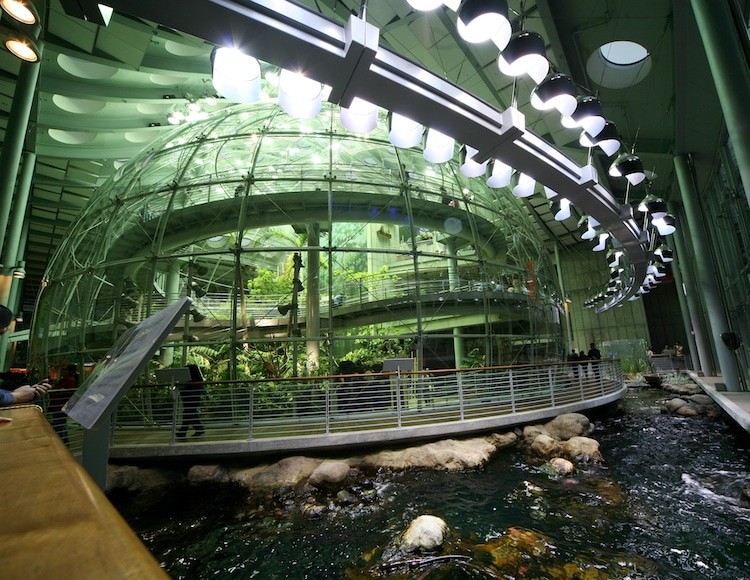 California Academy of Sciences Rainforest Exhibition