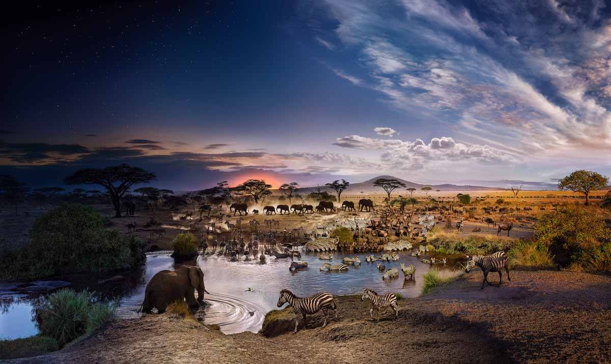 Serengeti National Park by Stephen Wilkes
