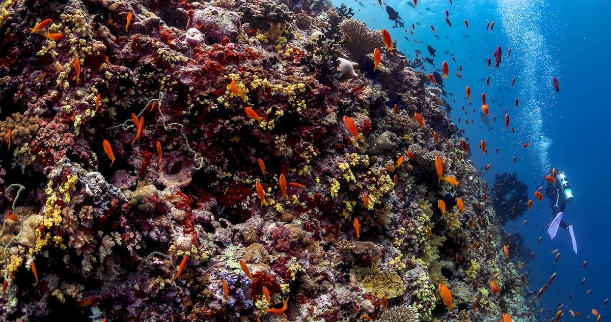 Underwater Dining Maldives