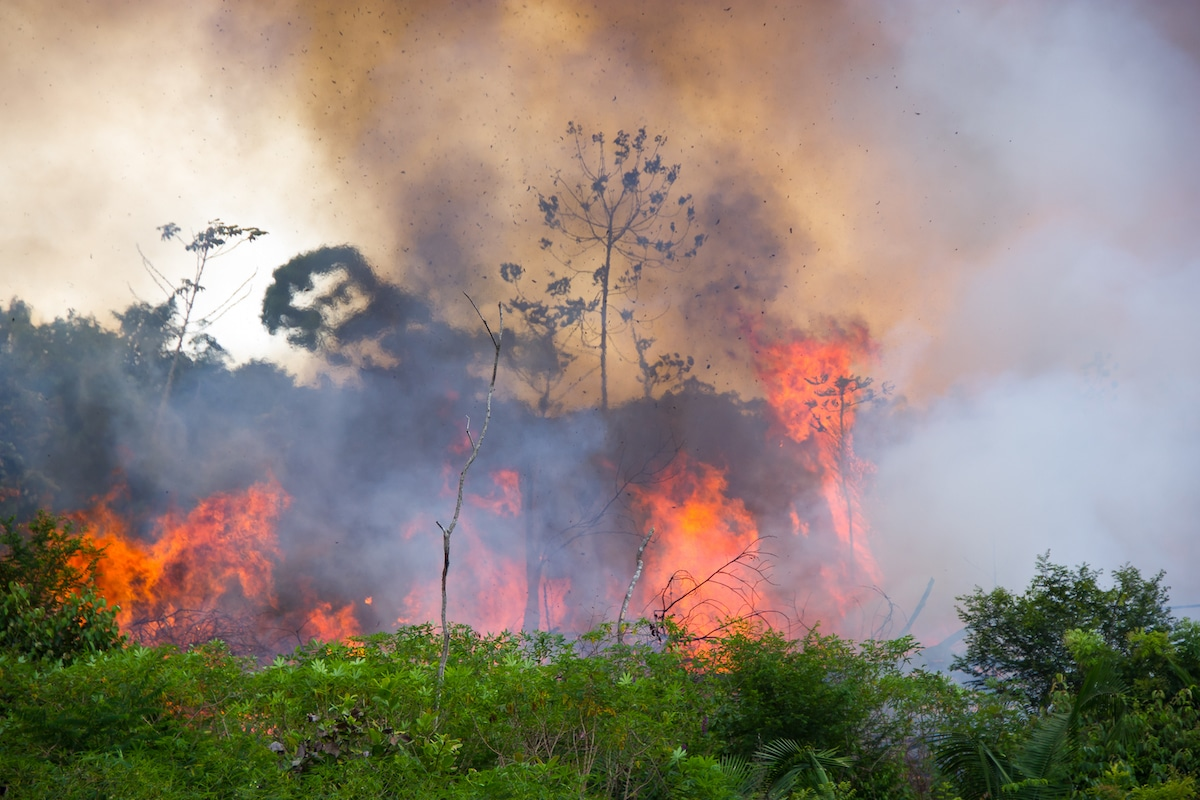 Fires in the Brazilian Amazon