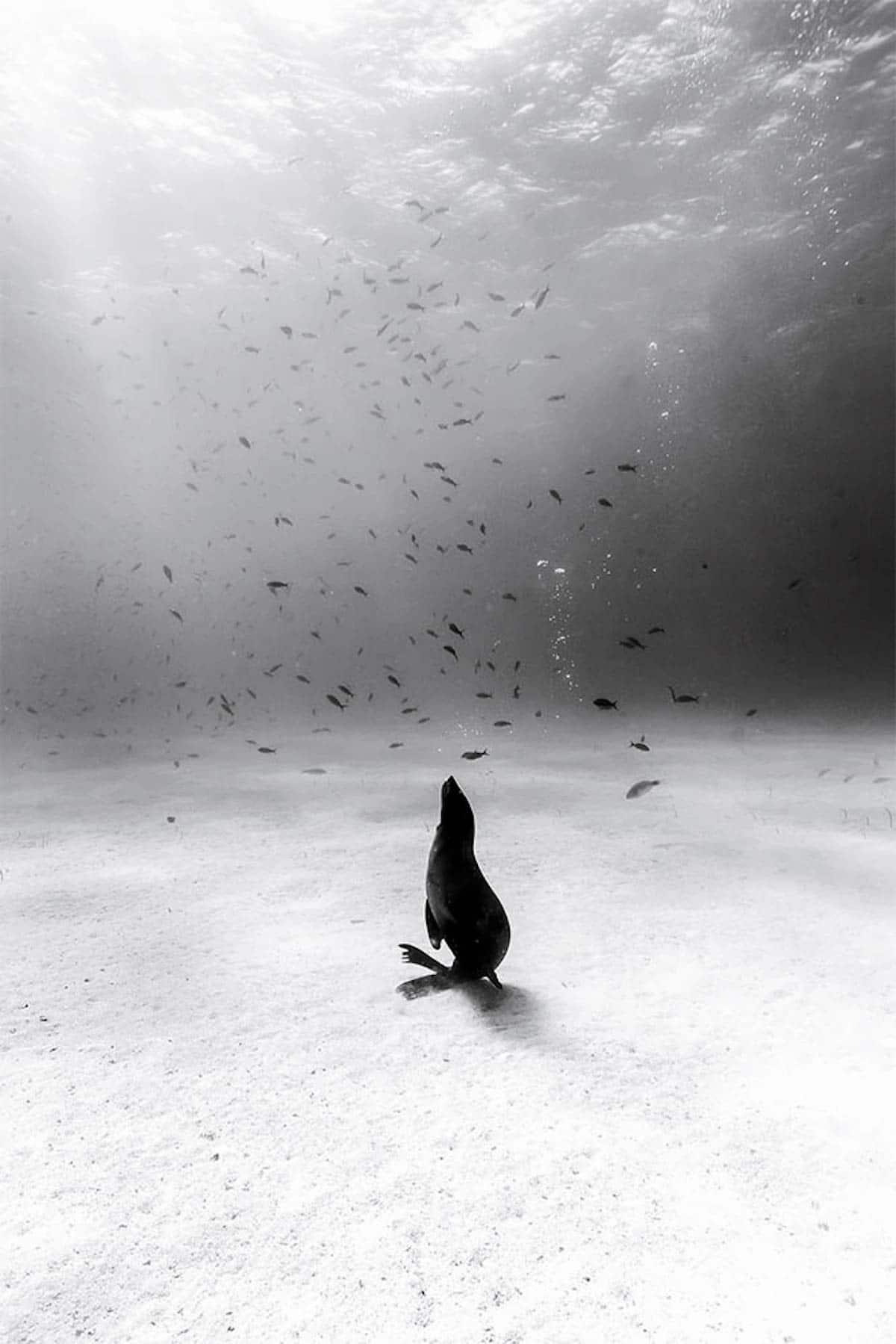 fotografía subacuática en blanco y negro por Christian Vizl