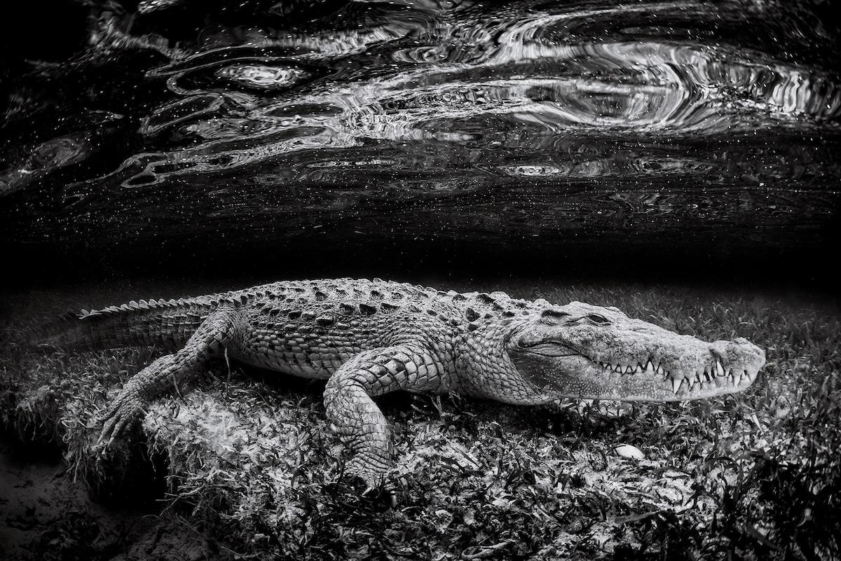 Christian Vizl - fotografías bajo el mar