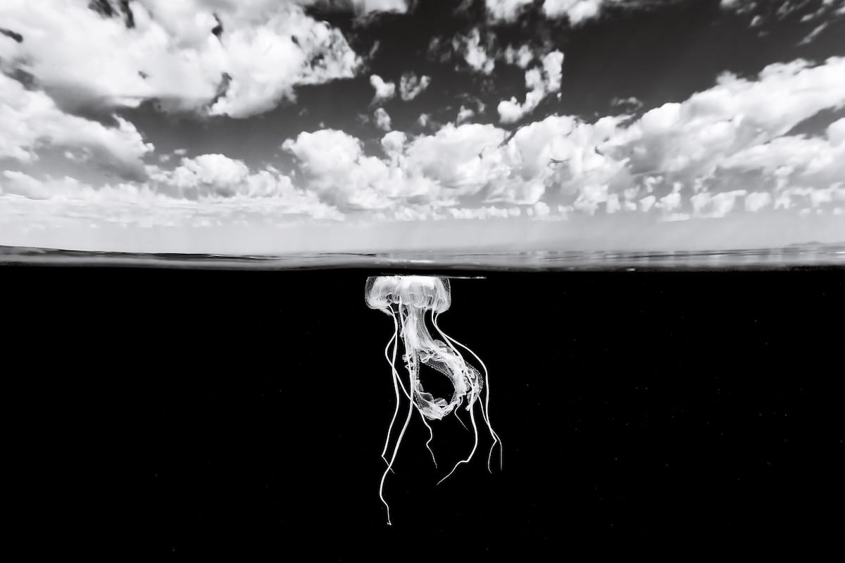 Black and White Photograph of a Jellyfish