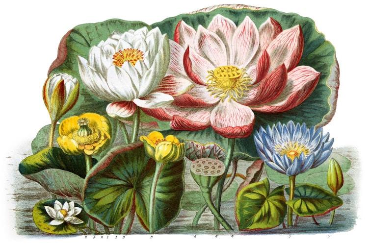 Restauración de un catálogo botánico por Nicholas Rougeux