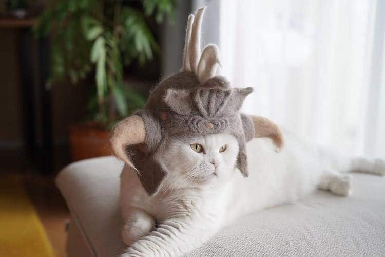 Cat Hats Made of Hair by Ryo Yamazaki