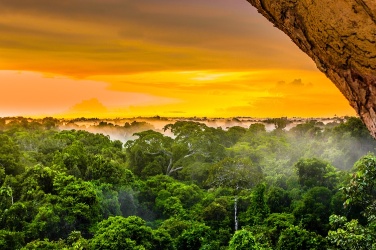 How to Save the Amazon Rainforest