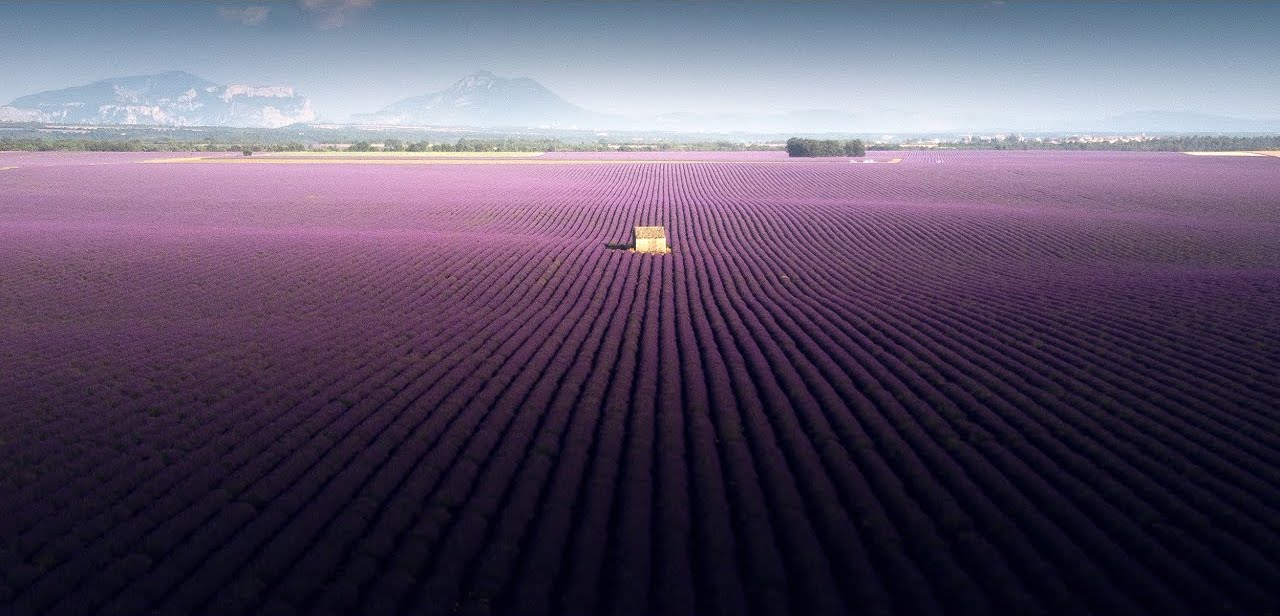 Lavender Fields Video by Samir Belhamra