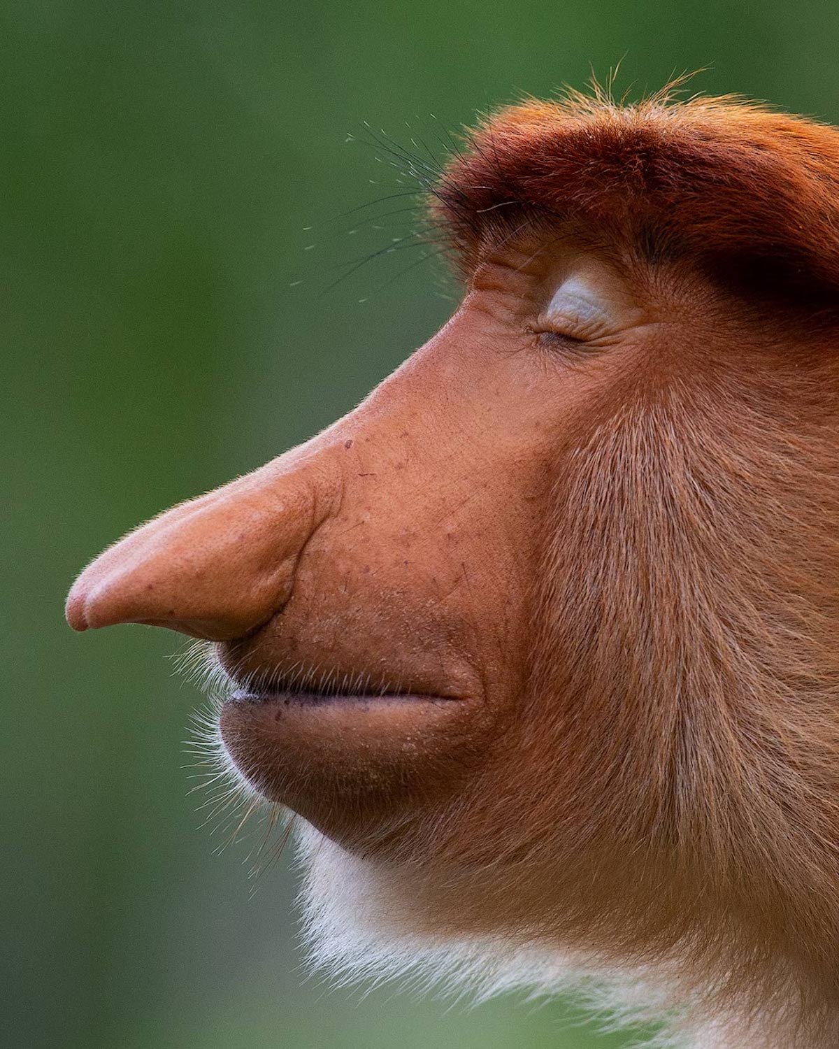 Photos of Monkeys by Mogens Trolle