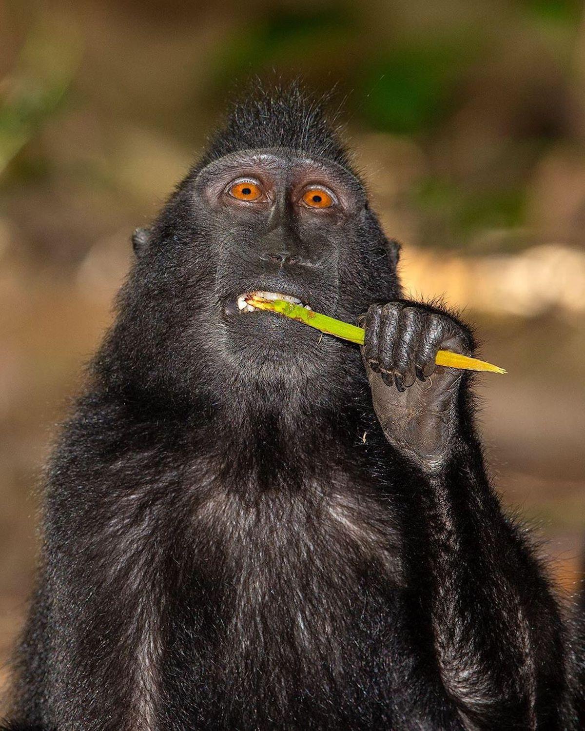 Photos of Monkeys by Mogens Trolle