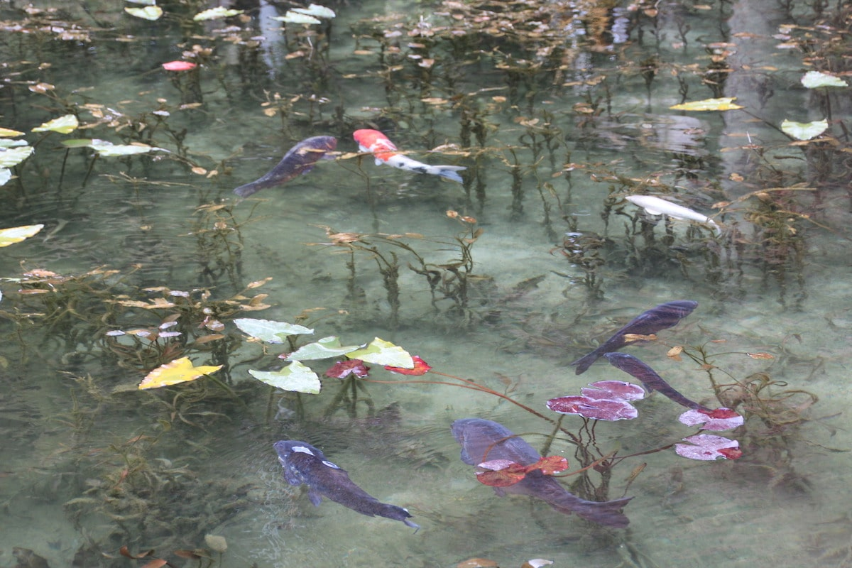 Monet's Pond in Seki City