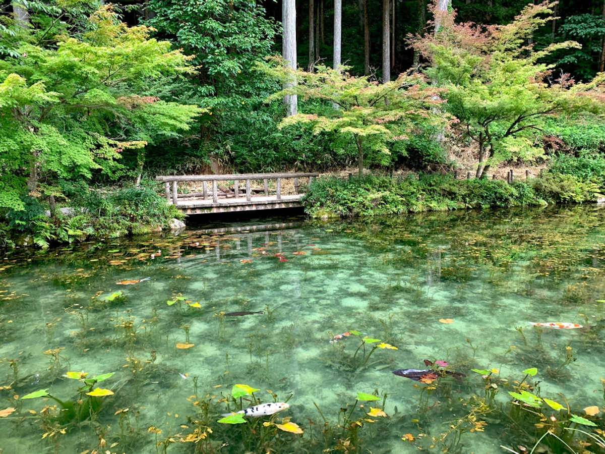 Monet's Pond in Gifu Prefecture