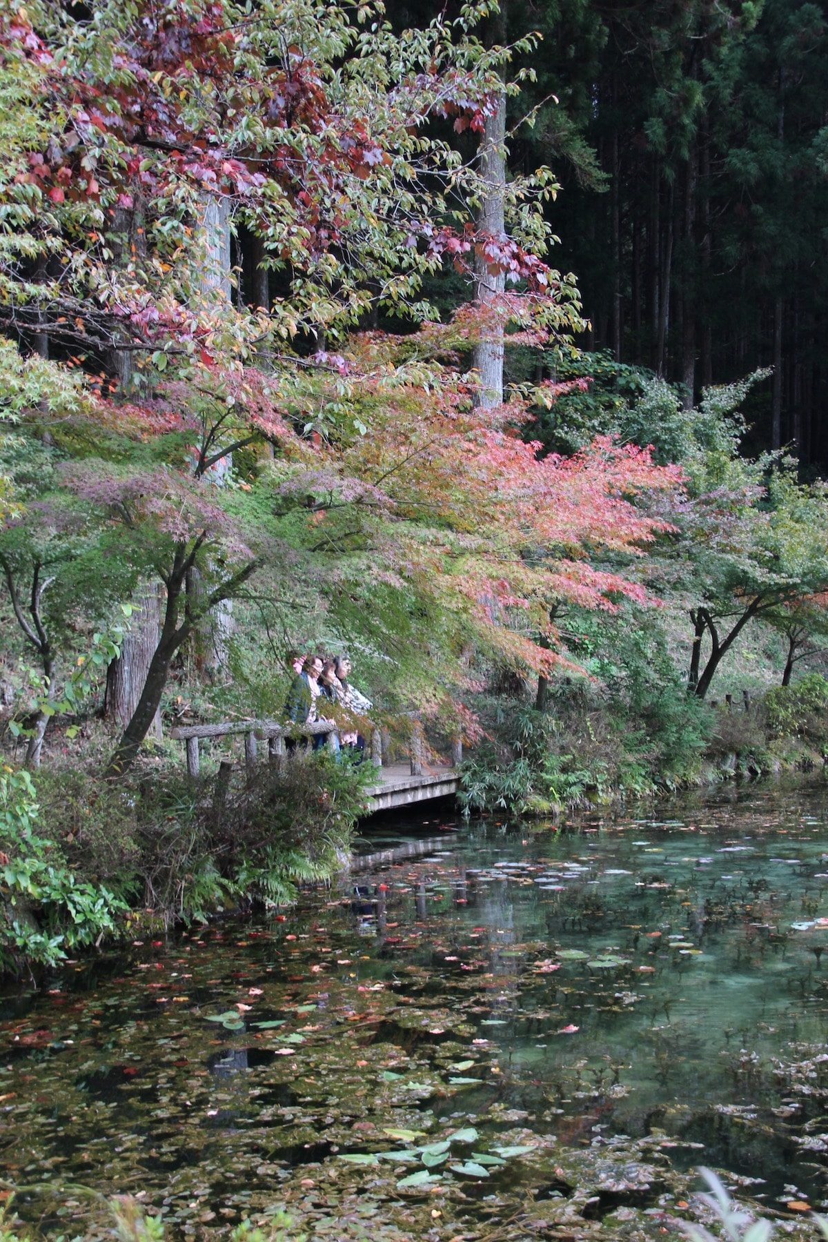 Monet's Pond in Japan