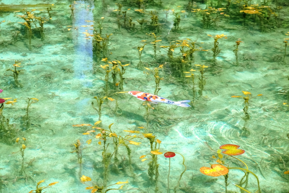 Pond That Looks Like a Monet Painting