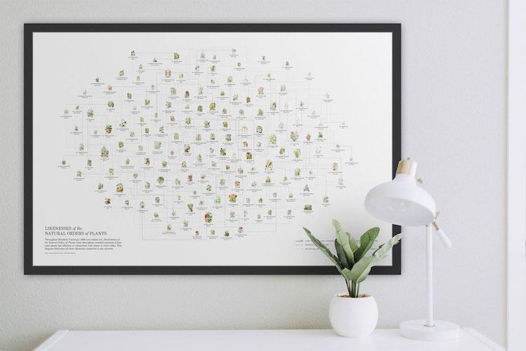 Poster de ilustraciones botánicas