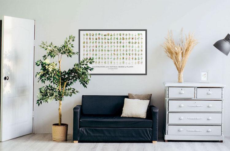 Poster de ilustraciones botánicasr