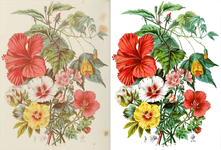 Illustrations of the Natural Orders of Plants by Elizabeth Twining Online