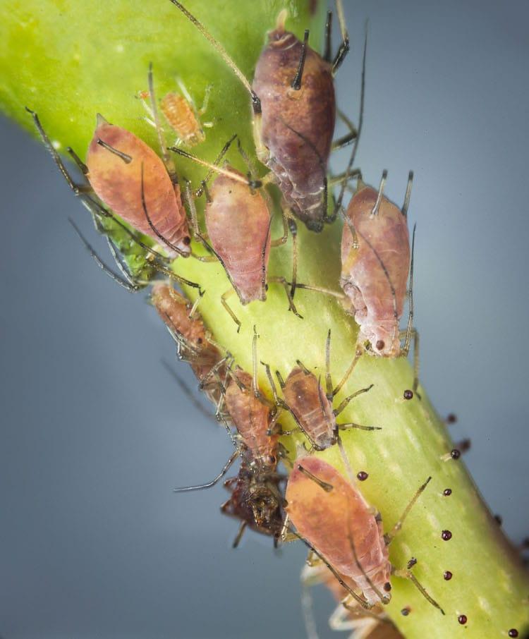 Macrophotographie des insectes