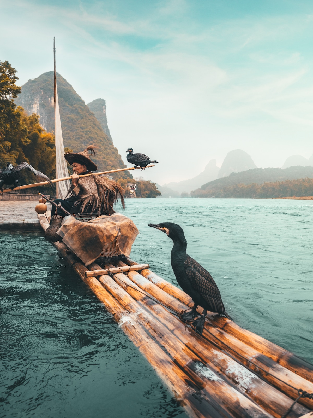 Fishing with birds in China