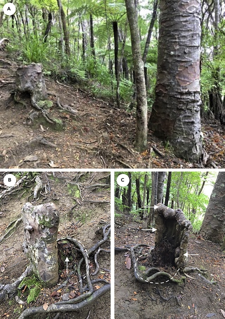 Symbiotic Relationship Between Trees and Stumps