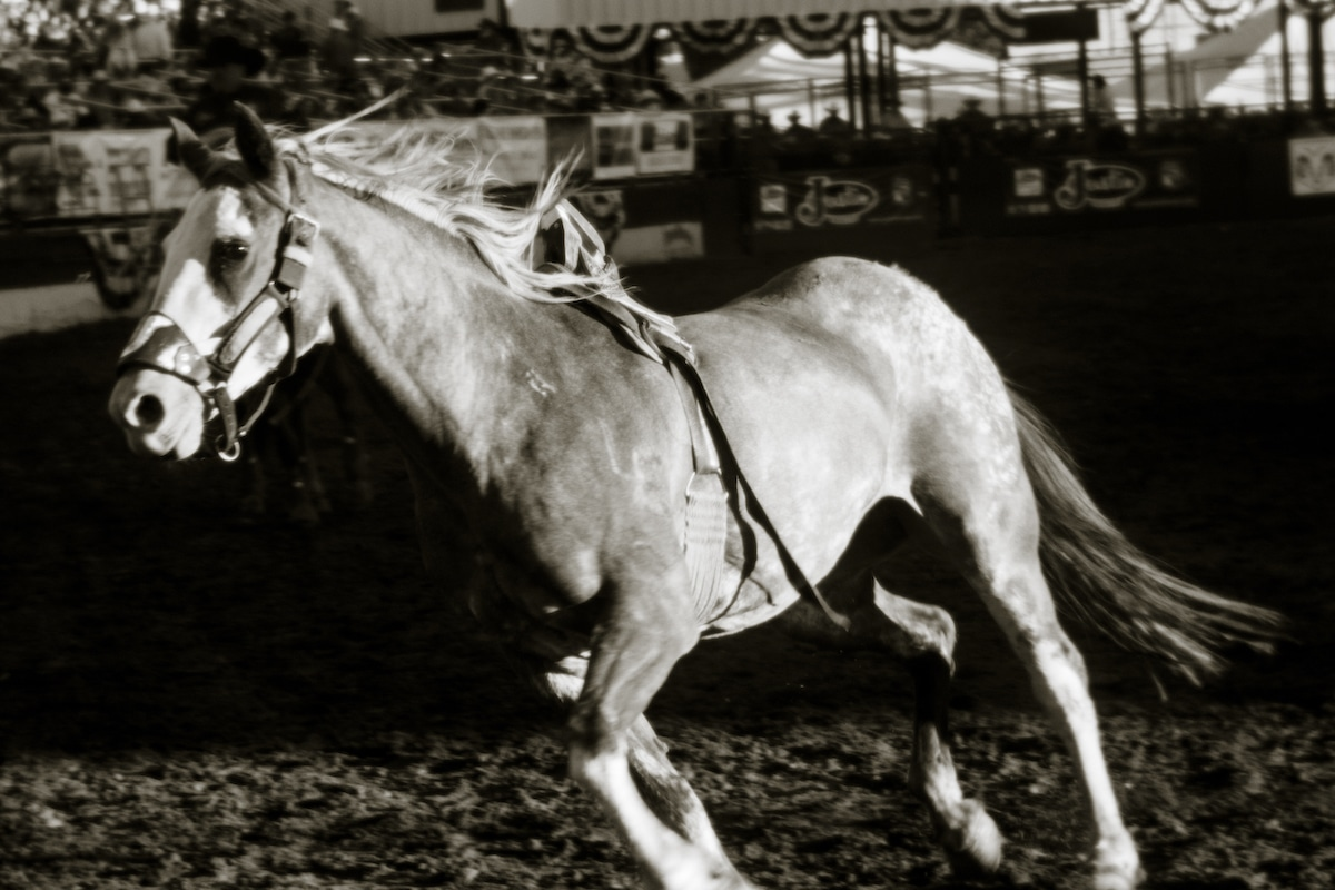 Horse Galloping at a Rodeo