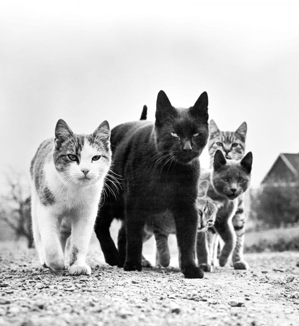 Walter Chandoha Cats - libro de fotografía de Taschen