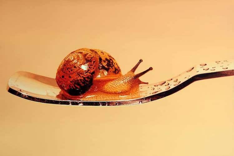 Pintura hiperrealista de un caracol
