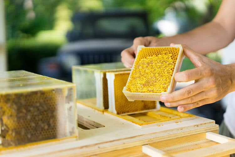 Modern Beekeeping Equipment