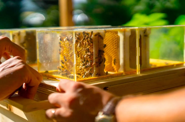 B-Box - Urban Beekeeping