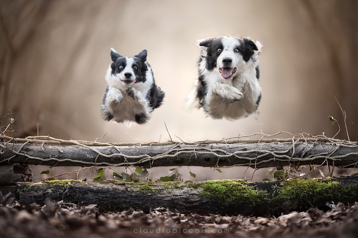 Dog Photography by Claudio Piccoli