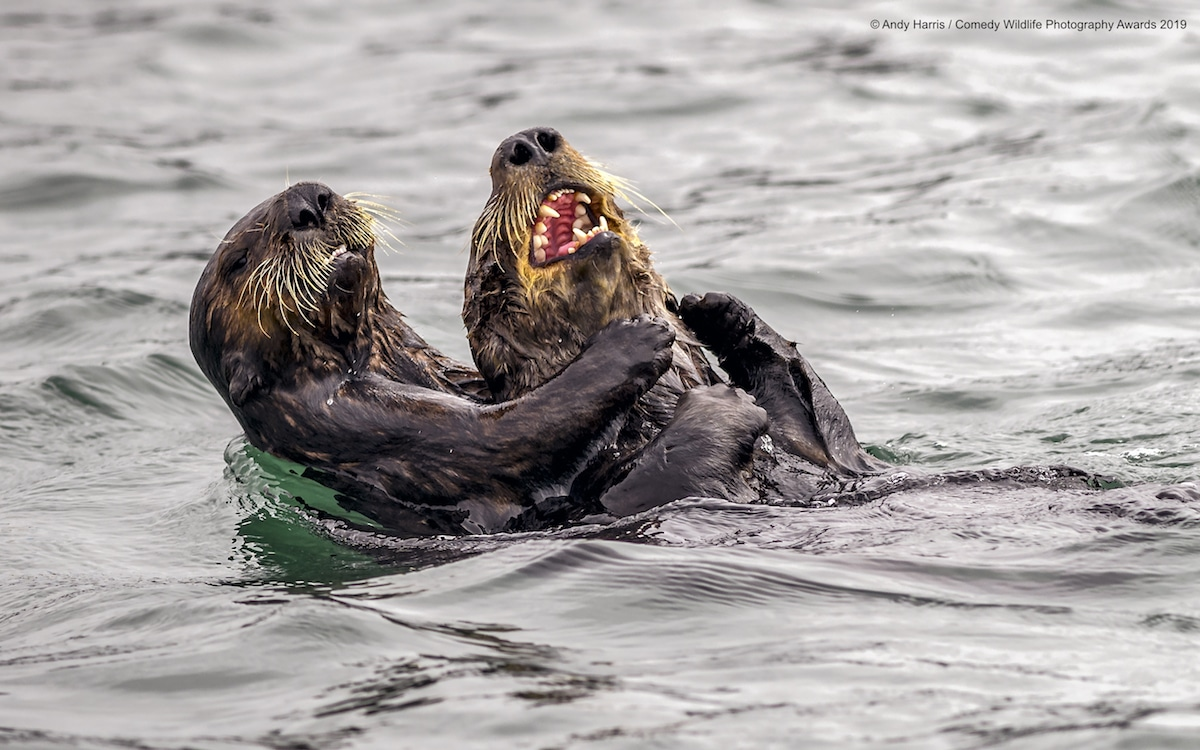 2019 Finalists Comedy Wildlife Photography Awards