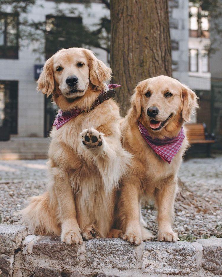 Dog Friend BFFs
