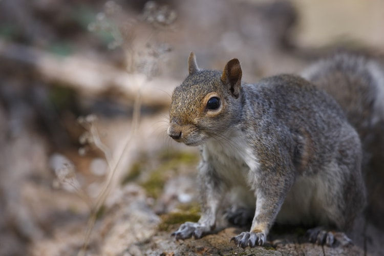 Squirrels Eavesdrop on Birds to Evaluate Danger