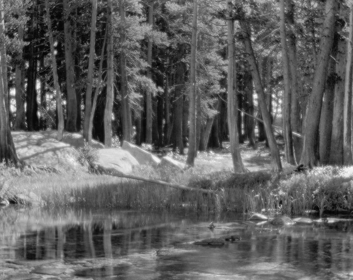 Lodgepoe Pines by Ansel Adams