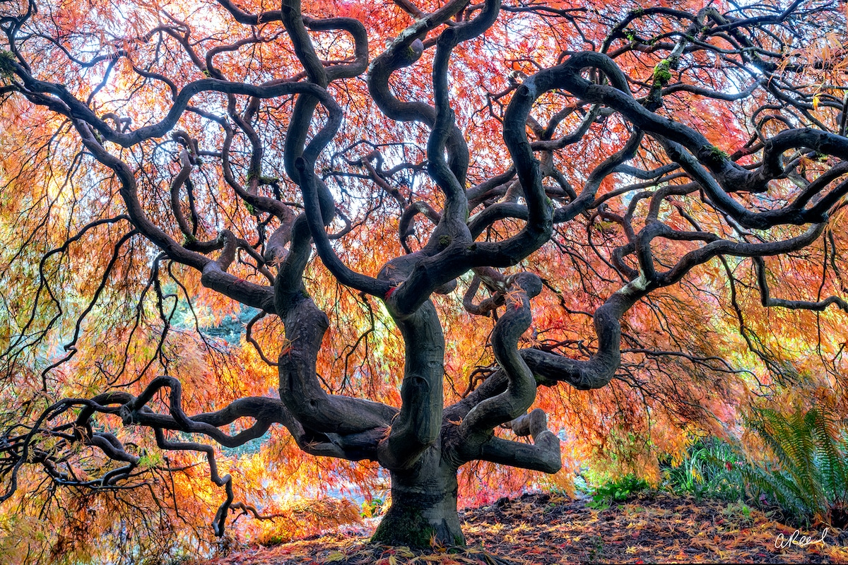 Nature Photograph by Aaron Reed