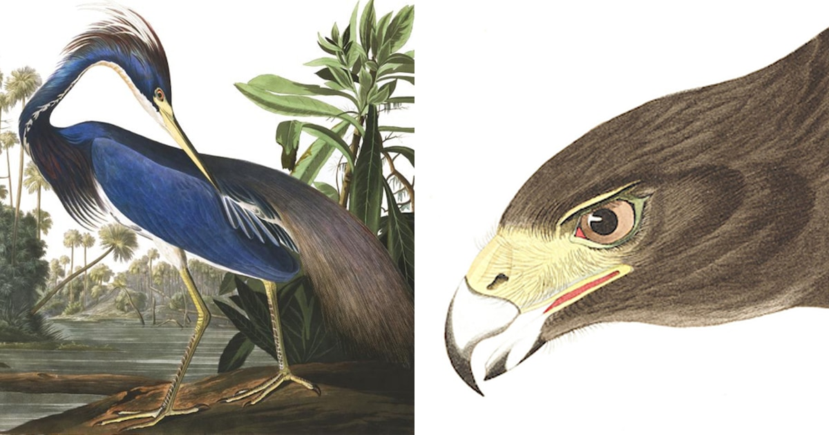 POSTER BIRDS OF AMERICA AUDUBON DOUBLE-CRESTED CORMORANT VINTAGE REPRO FREE S//H