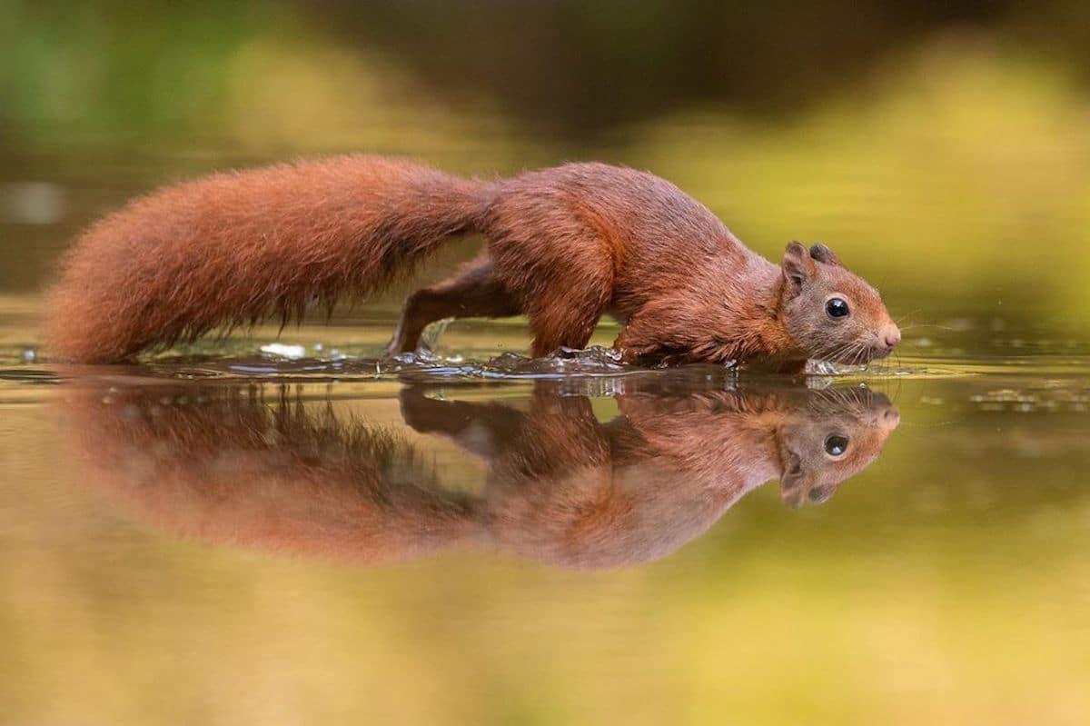 Cute Squirrel Photos
