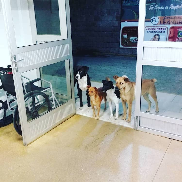 Dogs Wait for Owner