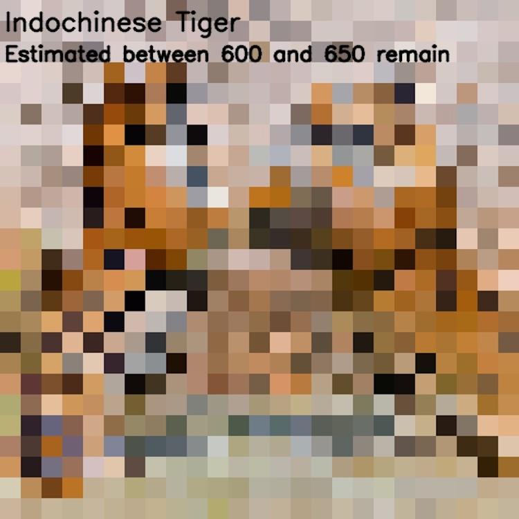Photos pixélisées d'espèces en voie de disparition par JJSmooth44