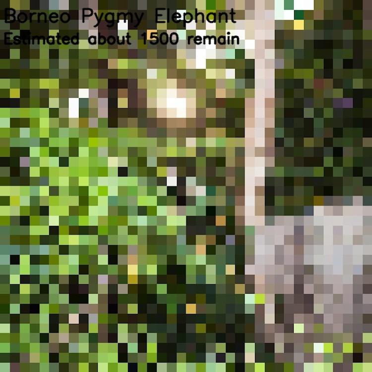animales en peligro de extinción imágenes pixeladas