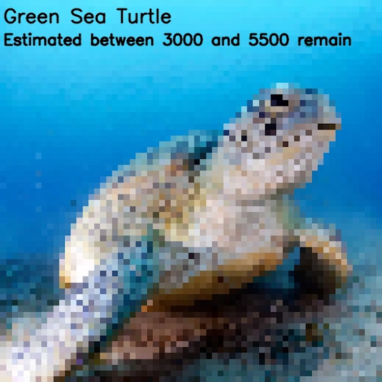 Blurry Images Represent Endangered Species As Pixels
