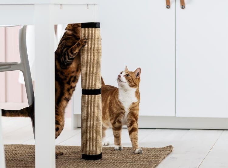IKEA Cat Scratching Post