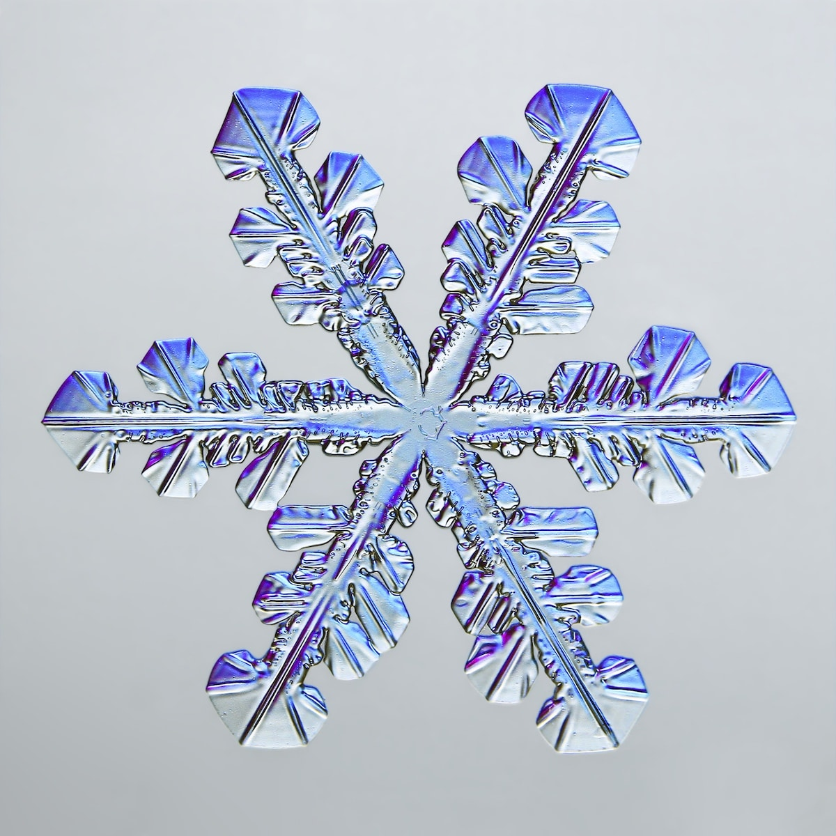 fotomicrografía de copo de nieve